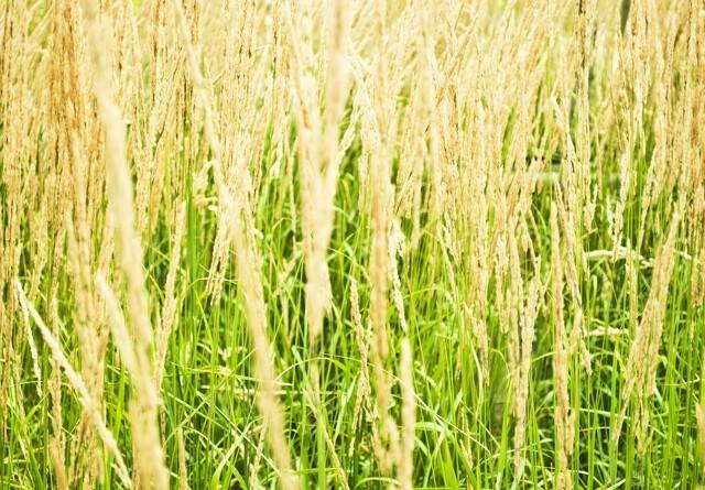 Landboforening forudser konkurser efter tørke
