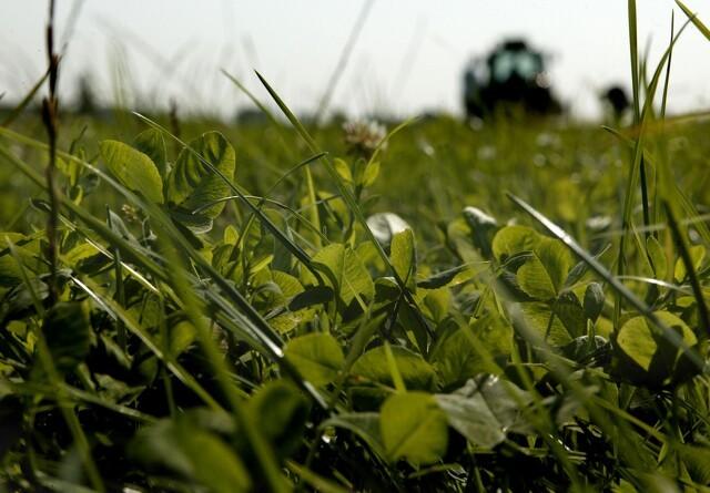 Styrelse tillader økologer særlig brug af græs- og kløverfrø
