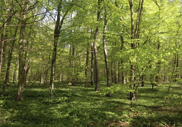 Danmark får dobbelt så meget vild skov
