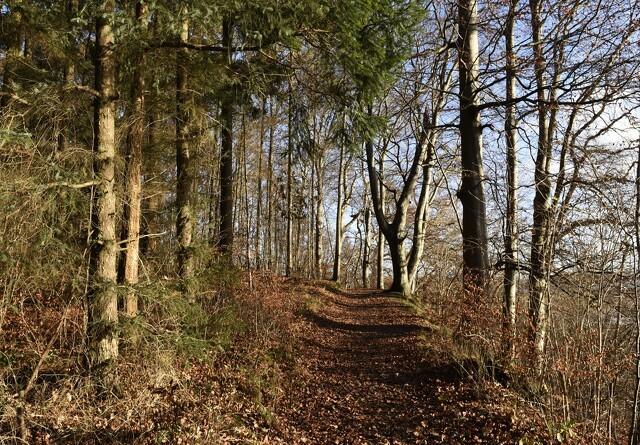 Dødelig svamp skyder op i Nordjylland