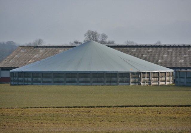 160 mio skal reducere ammoniak-udledningen