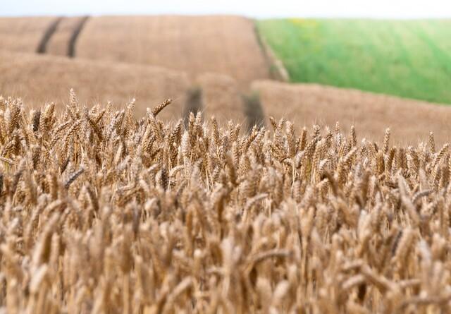 Jyske Markets: Intet nyt om russisk hvedeeksport