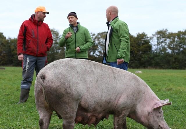 Gratis økotjek til landmænd på Fyn