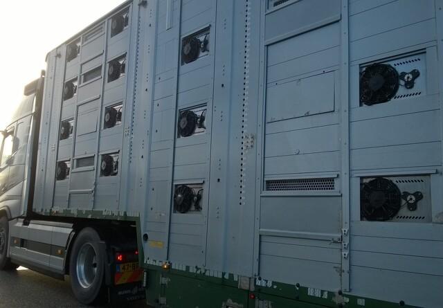 Svinetransportører sløser med vask af lastbiler