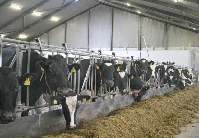 Landmænd under mistanke for svig i støttesager