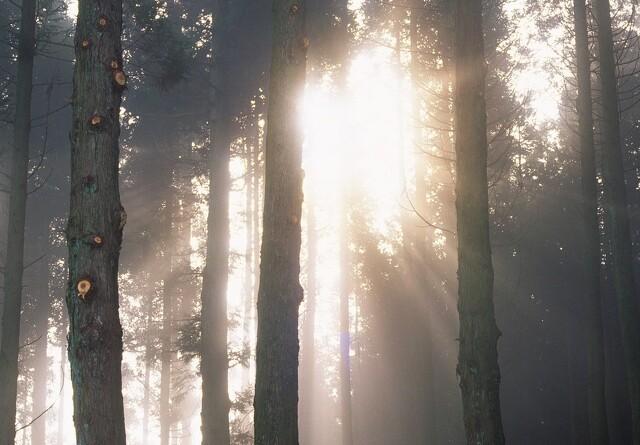 Udbetaling til skovrejsning venter på sig
