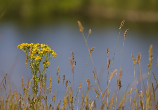 Store landbrugsarealer bliver til natur