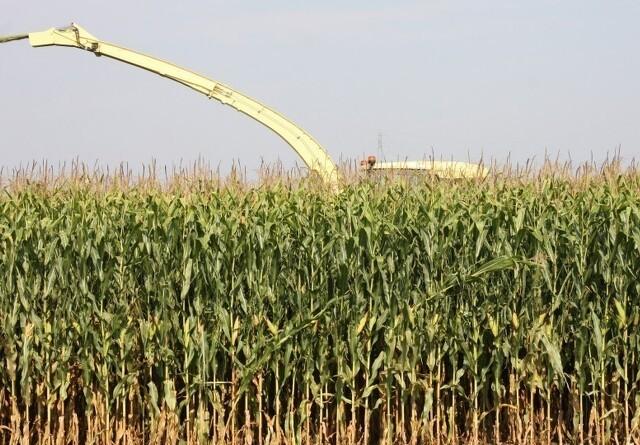 Jyske Markets: Rapport estimerer opbygning af afgrødelagrene