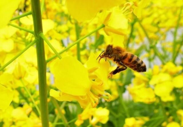 Kom tæt på bierne på Biernes Dag