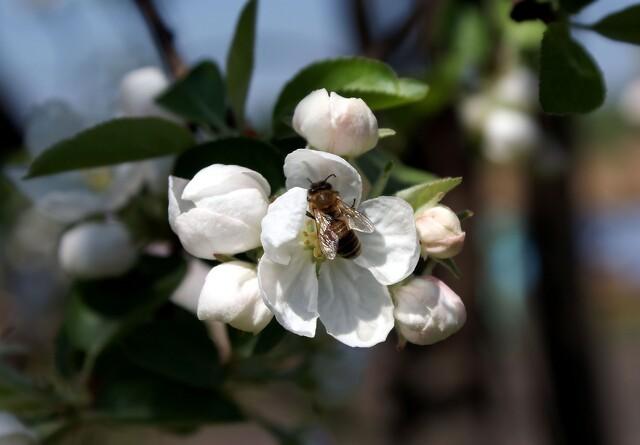 Flere bier på marken belaster ikke klimaet