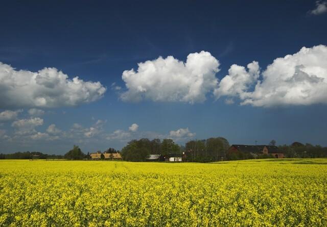 Næsten alle danskere har glæde af naturen