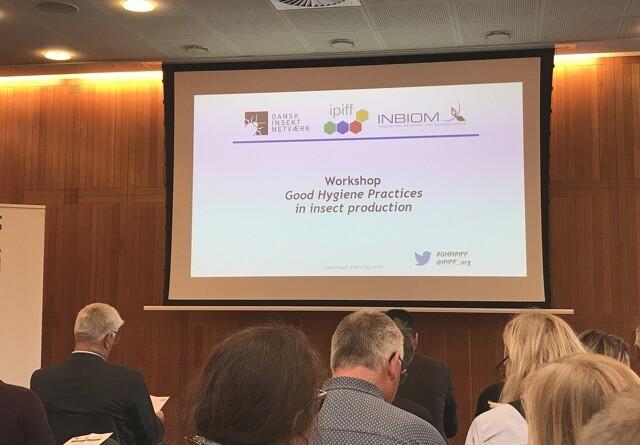 Insektdag på Axelborg styrker internationalt samarbejde