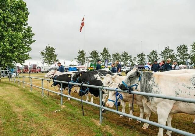 2600 husdyr til skue i Herning