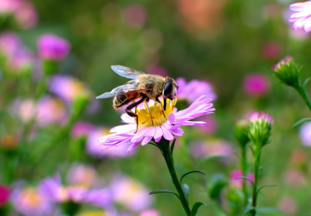 Golfbaner giver nye muligheder for bier