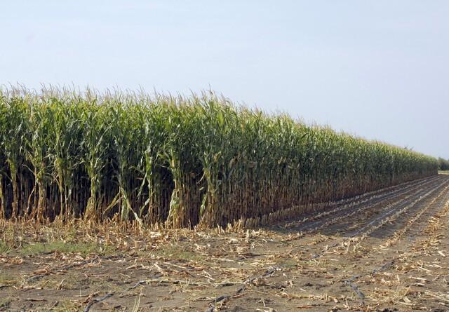 Goodwill kan sende landbrugsvarer fra USA til Kina