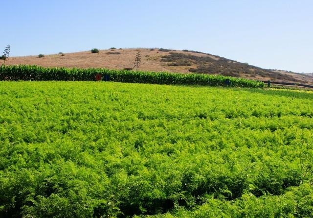 Frist for økologitilskud