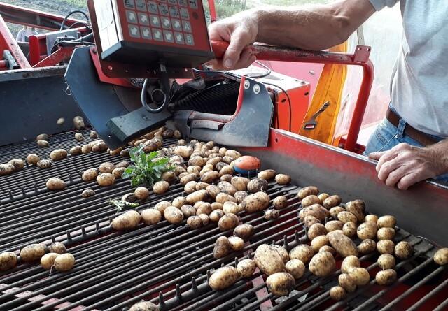 Elektronisk kartoffel-sladrer