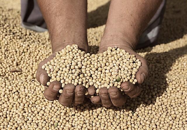 Nedbør over Brasilien presser soja
