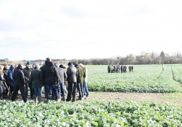 Personlige erfaringer med klimavenligt landbrug