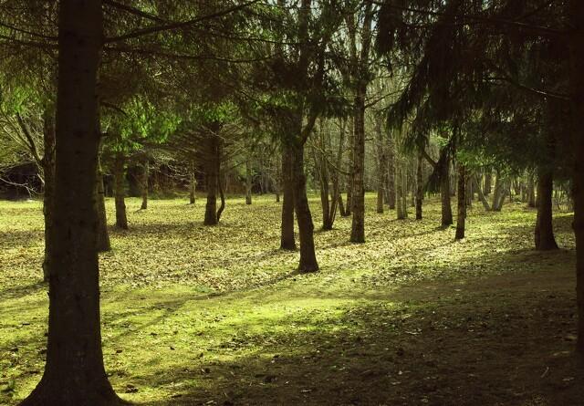 Ny bog sætter lys på skoven som CO2-opbevarer