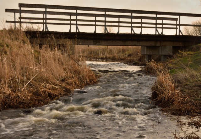 Vejen bygger ko-bro til 400.000 kroner