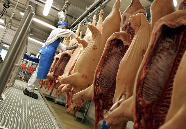 Manglende Kinaeksport koster svenske svineproducenter 300 millioner