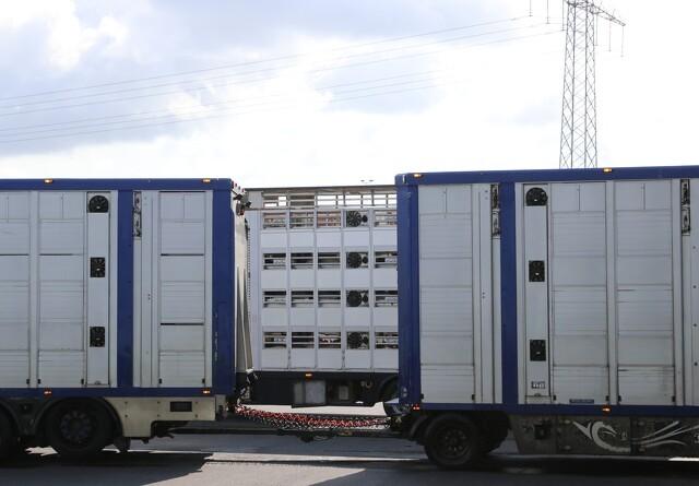 Forlænger kontrol med dyretransporter