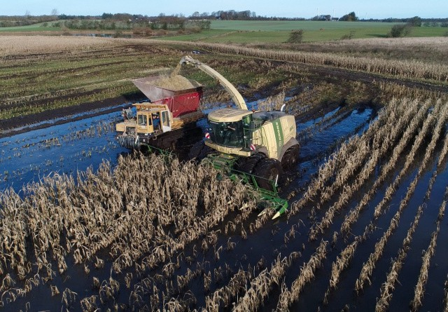 Dumper redder majshøsten i det nordjyske