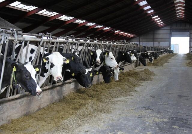 Sydkorea åbner døren for dansk oksekød