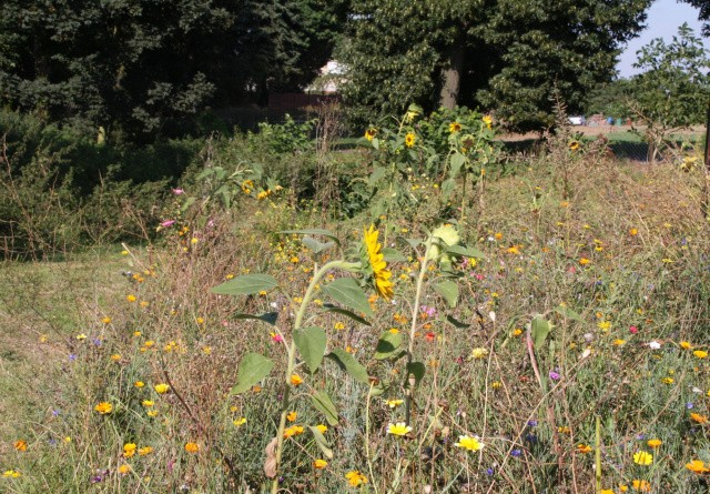 Dystre udsigter for biodiversiteten