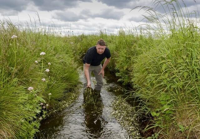 Vådområder er bedre end flere efterafgrøder