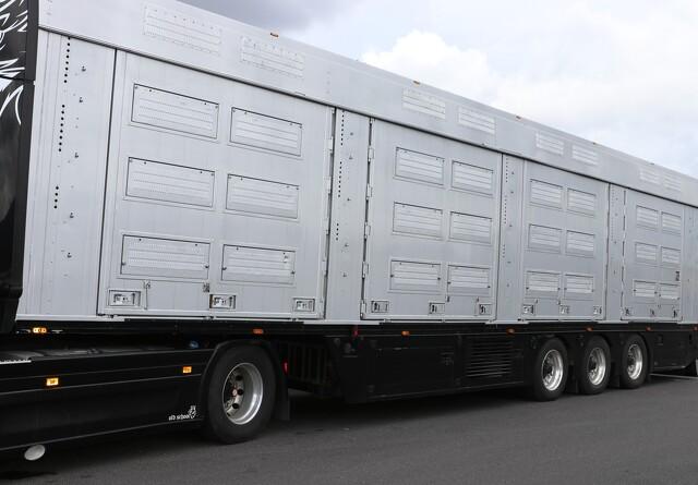 140 svin aflivet efter ulykke