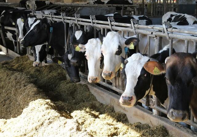 Bedre resultat for landbrugets økonomi end ventet