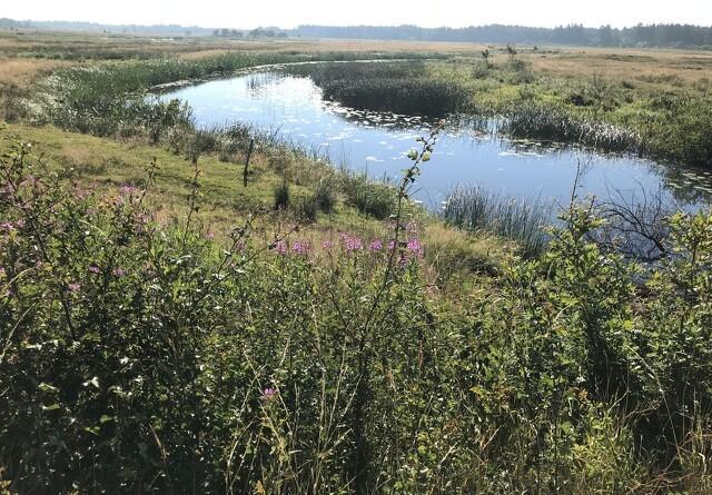 Ansøgninger for vådområder er nu åben
