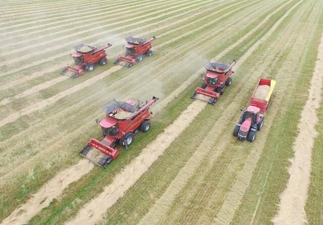 Danmark er verdensmestre i græsfrø