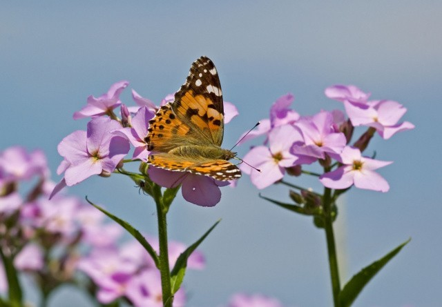 WWF klar med akutpakke til naturen
