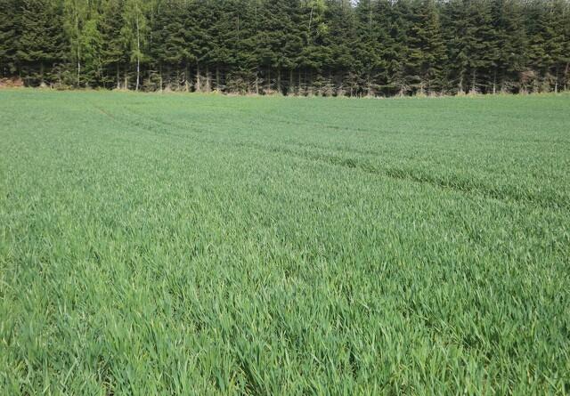 Jyske Markets: Europæisk hvede fortsætter op