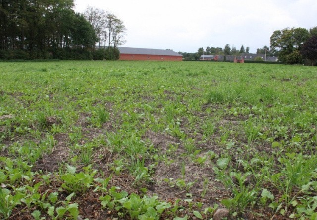 Endnu 17 plantebeskyttelsesmidler skal udfases