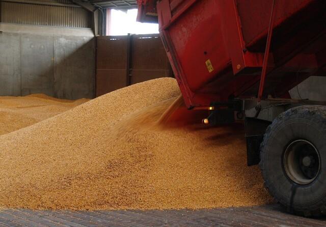 Stort udbud af korn presser prisen
