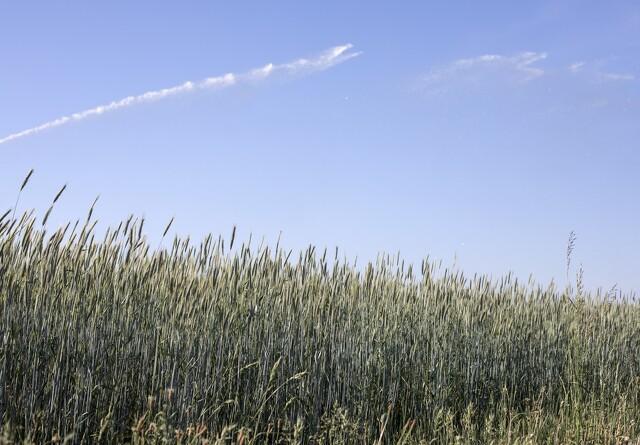 Nyt værktøj skal give landmænd et klimaregnskab for deres gård