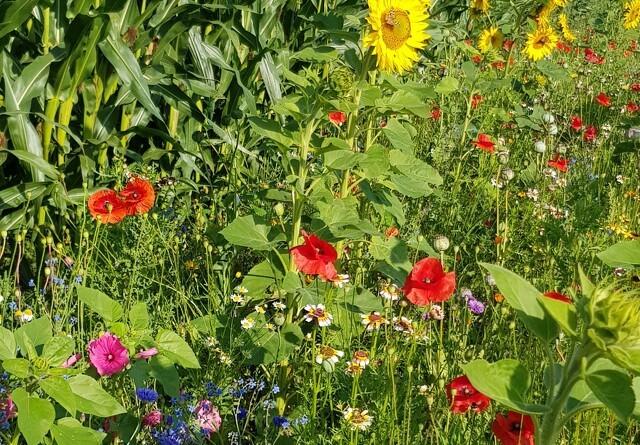 Landbruget vil hjælpe med at skabe mere liv i agerlandet