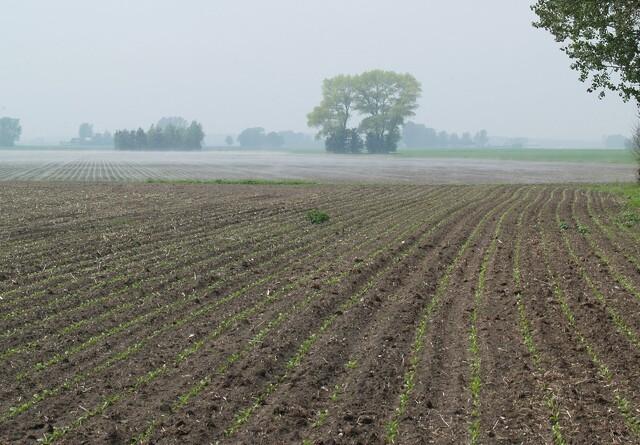 - Klimatiltag og landbrugsstøtte bør hænge sammen