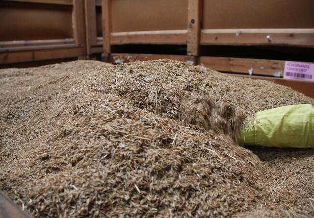 Covid-19: Rettidig forsyning af frø og såsæd