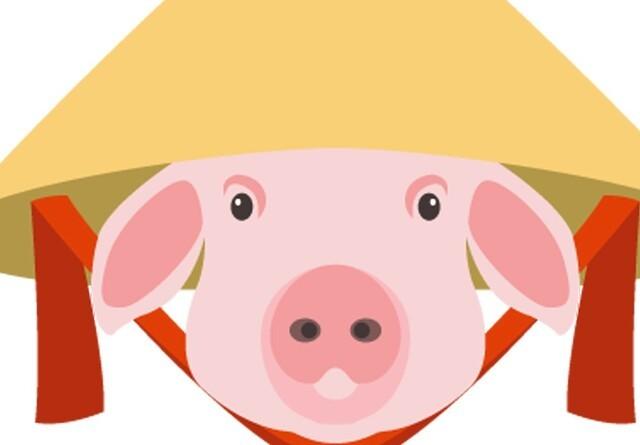 Kinesisk svinesektor vil rejse sig igen