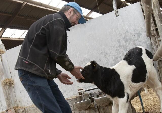 Nordjyske oksekødsproducenter efterlyser covid-19-støtte
