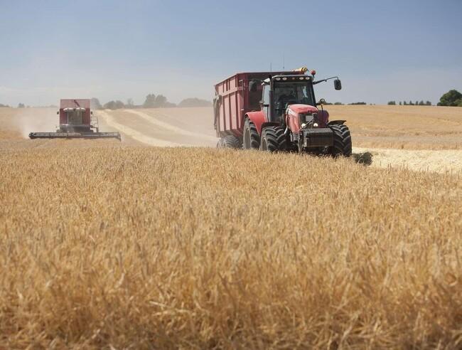 Høsten går ind i afsluttende fase: Store udsving i gennemsnitlig høst