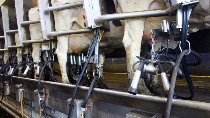 Med BicarZ op til +4 kg mælk per ko per dag