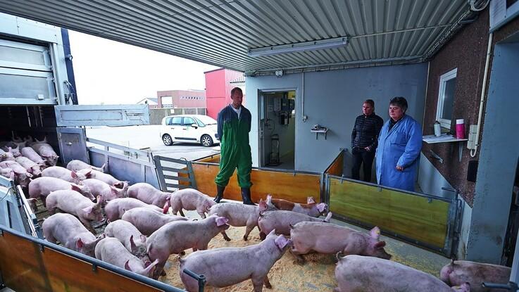 Dyrevelfærd - ambitiøs handlingsplan krænker branchen