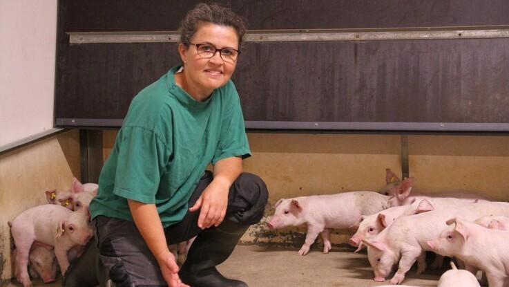 Fodringsforsøg med de mindste grise