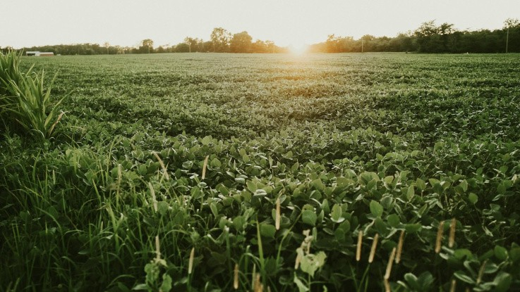 L&F: Bæredygtig løsning på sojaimport er krav og innovation